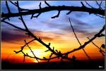 Sonnenuntergang auf dem Saargau