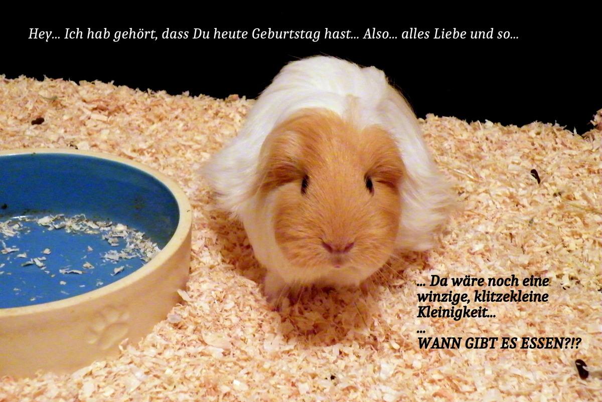 Geburtstagskarte Meerschwein 2015